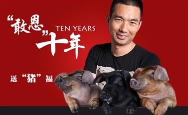 """敢恩十年 敢敢新年送""""猪""""福"""