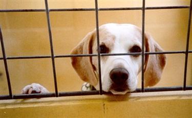 英国从禁止动物实验行列中退出?