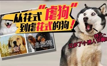 韩后和植美村都相恋了 是要虐死歌歌兰妮这只单身狗么?