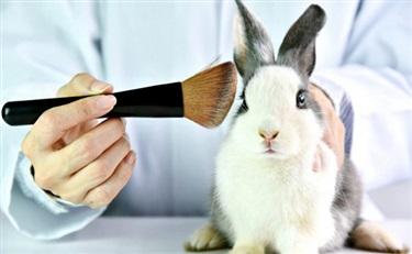 中国化妆品检测将告别动物实验?替代技术受国际认可