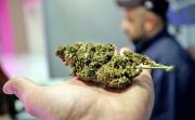 豪掷7.3亿港元,云南白药重金砸向工业大麻?