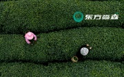 15年扎根中医理论,东方淼森专业资源为中国品牌铺捷径