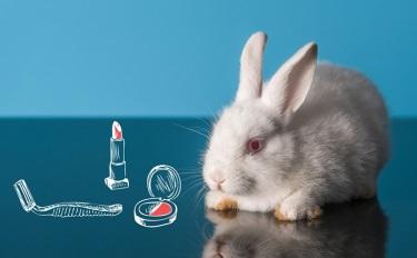 全球资讯164:进口普通化妆品将免做动物实验/CBD初创公司融资千万推美妆