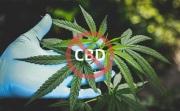 最新汇总!大麻原料被禁引起的品牌动向